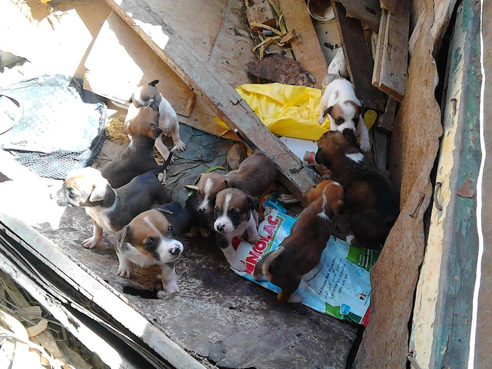 puppies in the garbage