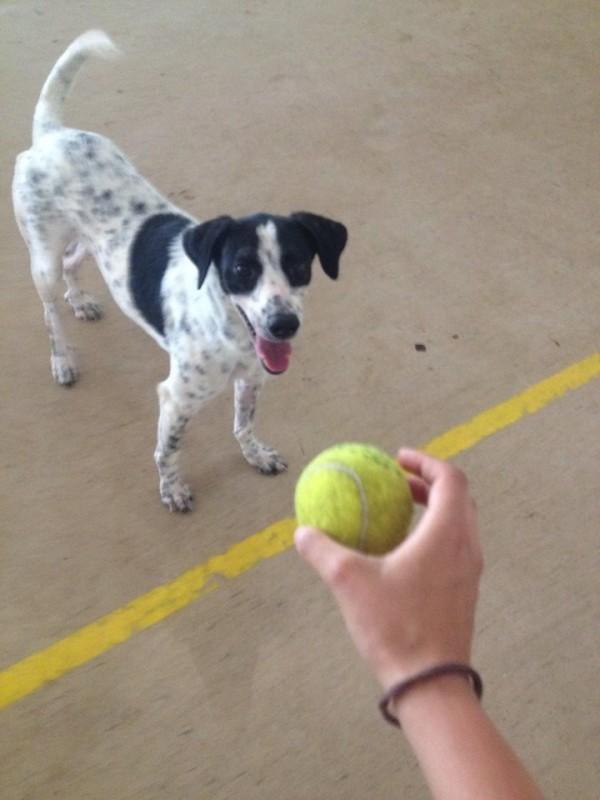 simabo's dog playing ball