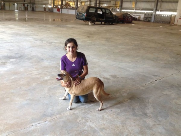 simabo's dog in the shelter