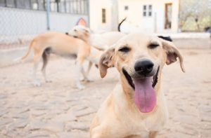 dog at Simabo shelter