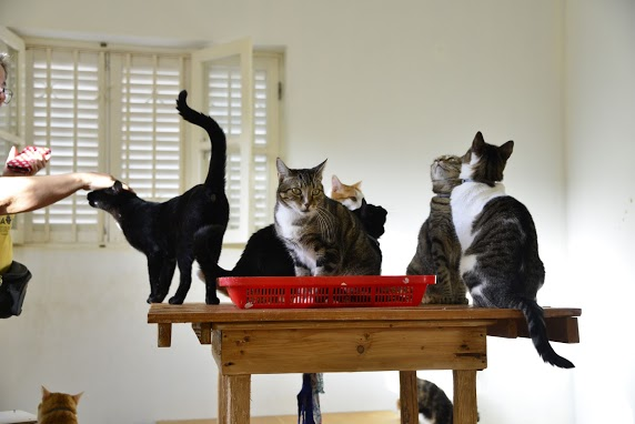 simabo cats shelter