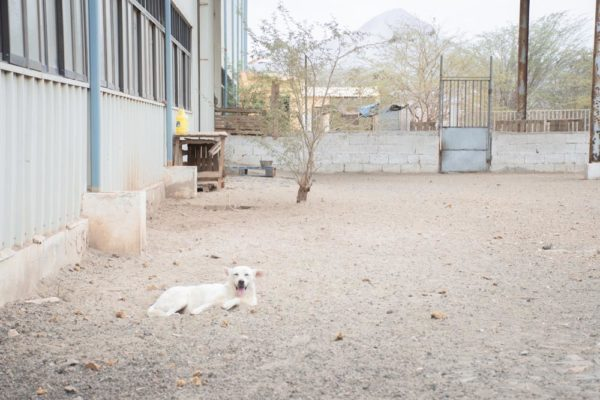 simabo dog shelter