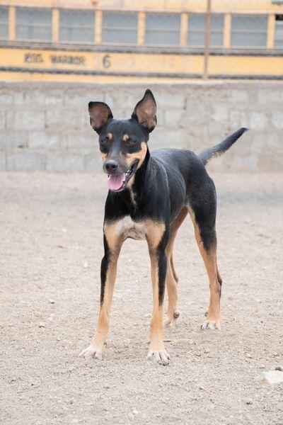 Turbo (Rafary)
